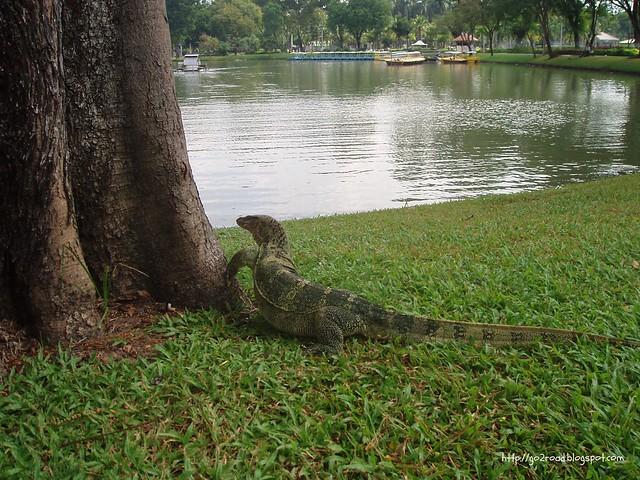 Lumpini Park, живность
