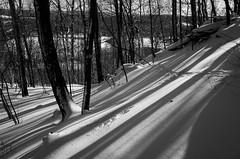 Deer tracks and long shadows