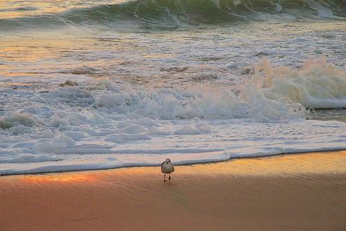 ocean beach sunrise dawn florida sandpiper indialantic