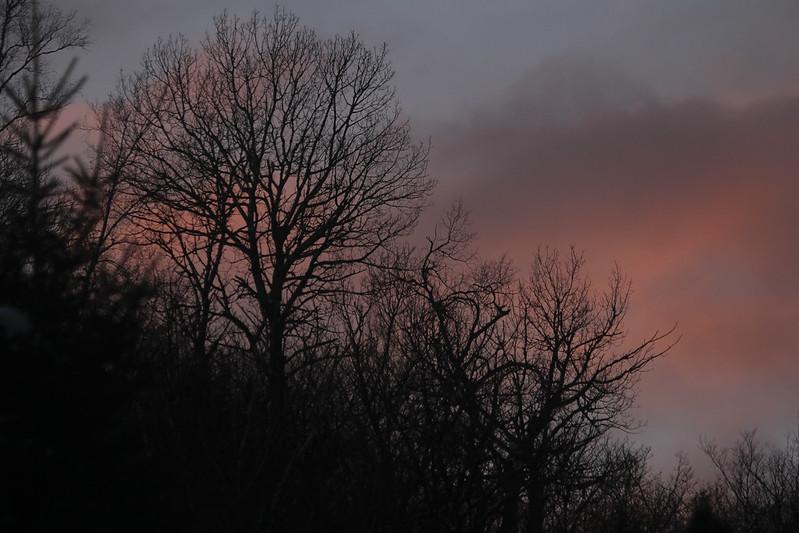 Pink Valentines dusk7