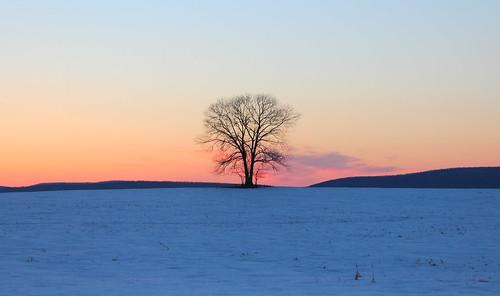 winter sunset snow dusk maryland vista magichour lonetree farmfield southmountain frederickcountymd middletownvalleymaryland