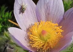 British Garden Flowers