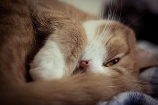 Kipper trying to sleep