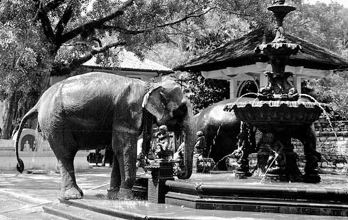 Kandi, Sri Lanka