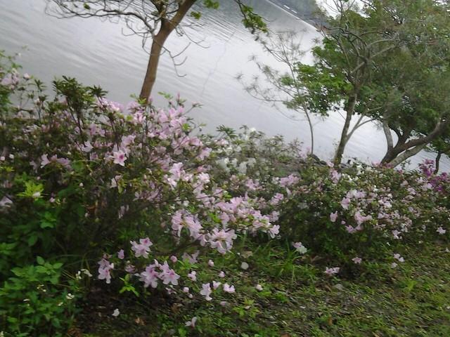 7555島旅遊 三月二日鯉魚潭