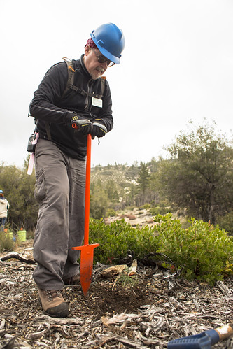 Angeles National Forest Planting - 2/22/15