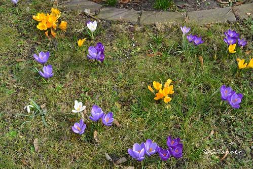 Frühlingsgarten März 2015
