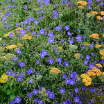 Scampston Walled Garden 2016-07-15
