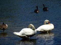 Wantagh Twin Lakes - North Lake (29)