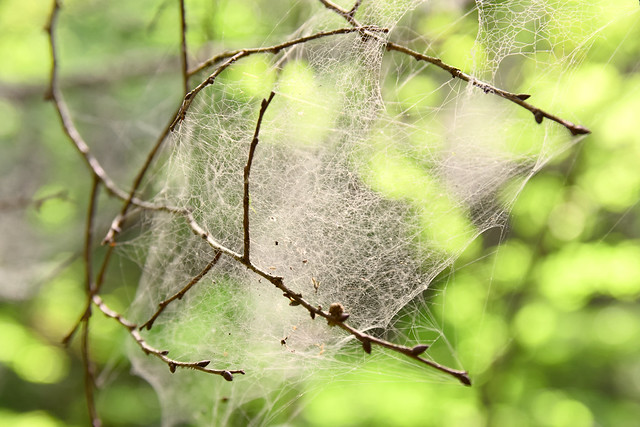 Photo:Spider's thread By 雷太