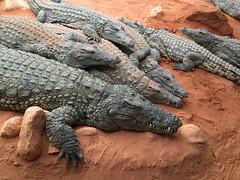 La ferme aux crocodiles (PIERRELATTE,FR26)