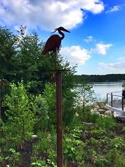 Lakewilcox