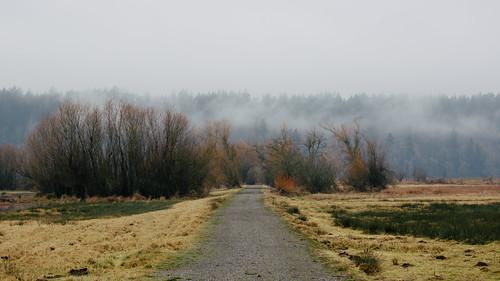 road trees nature fog landscape washington overcast pacificnorthwest canonef100400mmf4556lisusm nisquallynationalwildliferefuge canoneos5dmarkiii