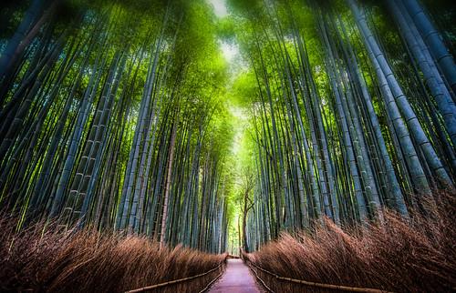 japan kyoto arashiyama kyotoprefecture