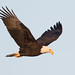 Airborne Eagle