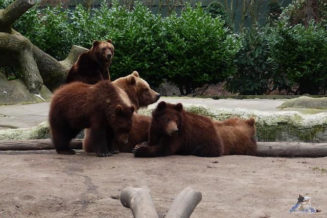 Tierpark Hagenbeck 14.03.2015  198