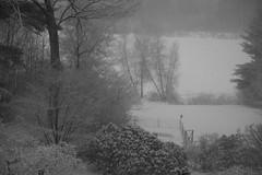 snow garden IMG_1947
