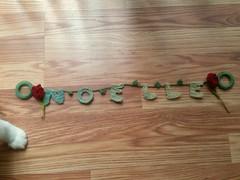 Noelle + Tulips