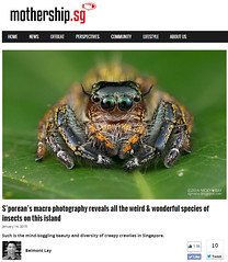 S'porean's macro photography reveals all the weird & wonderful species of insects on this island