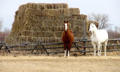 horses outdoors scenery montana scenic farms hay ranches