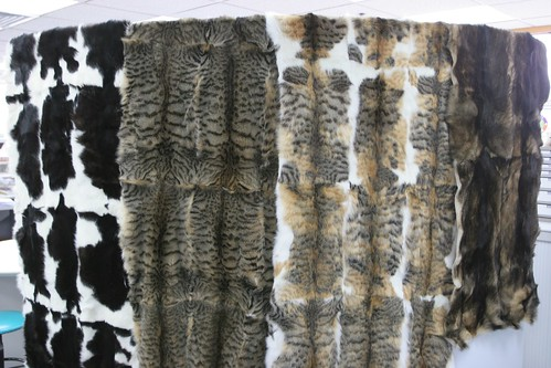 Dog and cat fur pelts