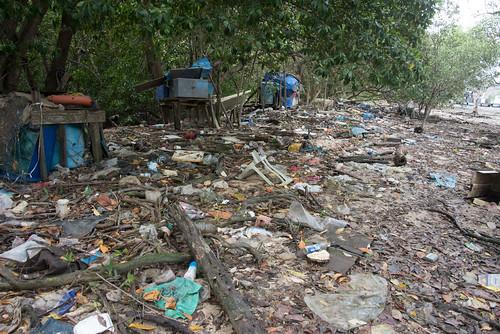 Dead fishes and trash at Lim Chu Kang Jetty, 10 Mar 2015