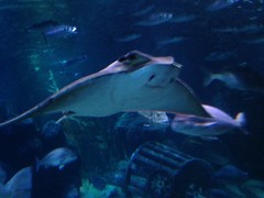 Berlin, Sealife