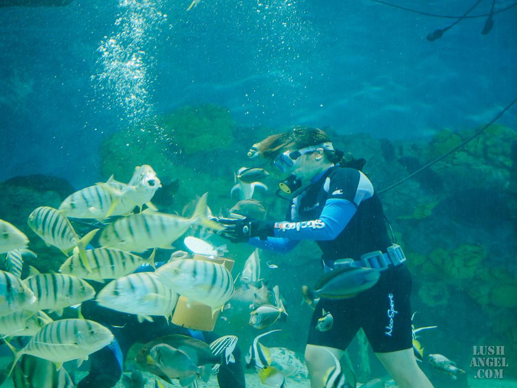 boracay-fish-feeding