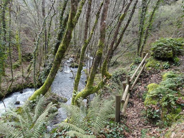 Sendero en la Ruta dos Muíños do río Gato