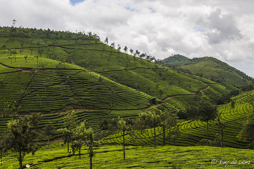 india mountains landscape tea kerala cochin teaplantation plantacióndete
