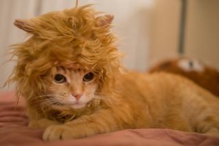 Cat Pi Pi
