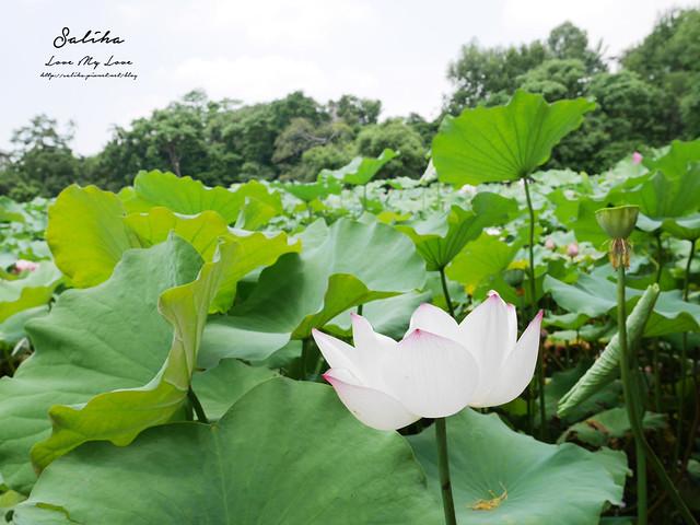 台北一日遊景點推薦植物園荷花蓮花池 (23)