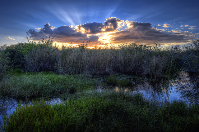 Photo of Sunrise near the Anhinga Trail, Everglades National Park, Florida