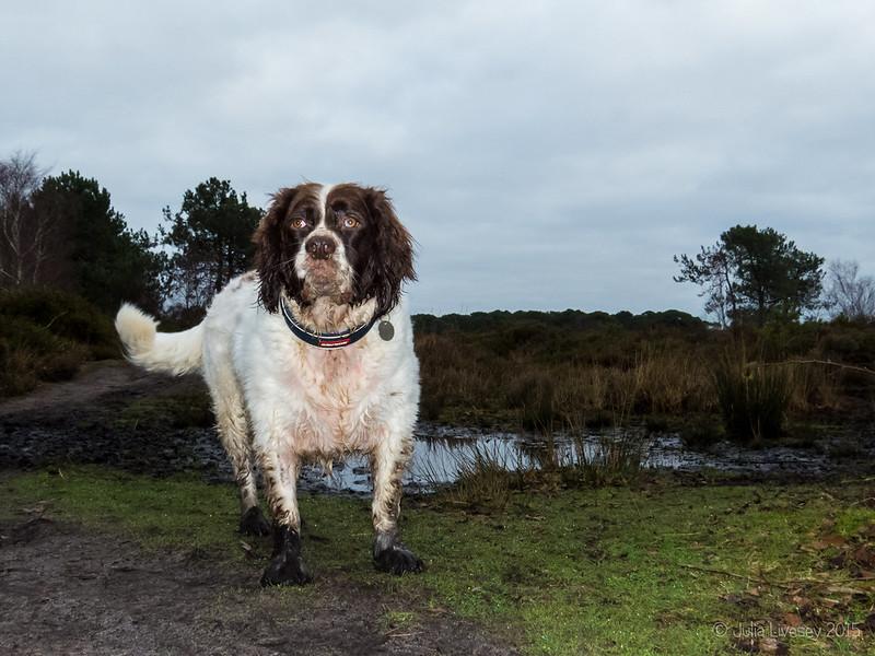Muddy paws!