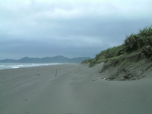 沙丘不僅為天然防線更是記載了海岸環境演變過程,應予保護與長期監測。郭瓊瑩攝