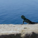 Lizard // Cape Point