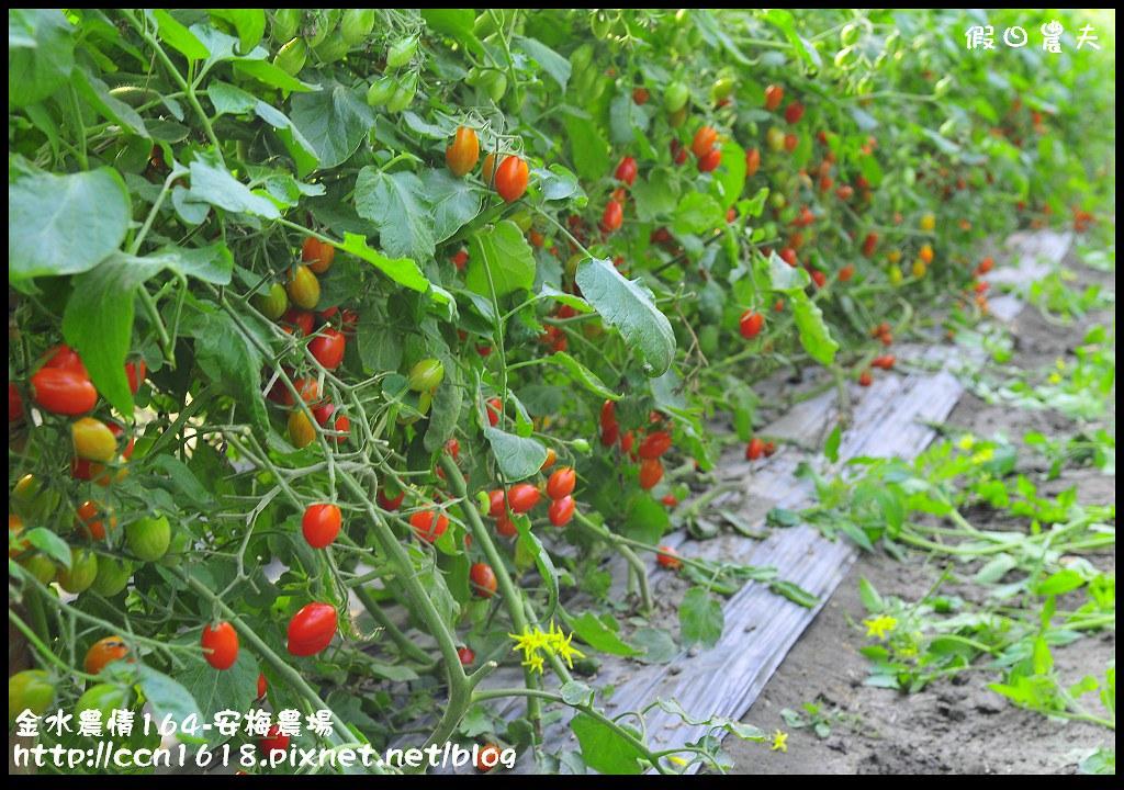 金水農情164-安梅農場_DSC8335