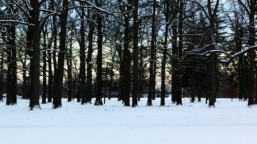 park trees winter sky snow cold tree nature climate