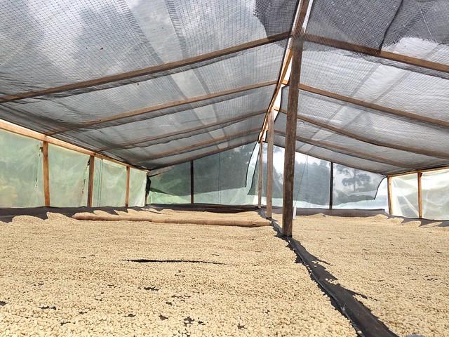 Casallas upper drying bed