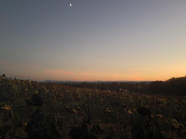 Dusk in Languedoc
