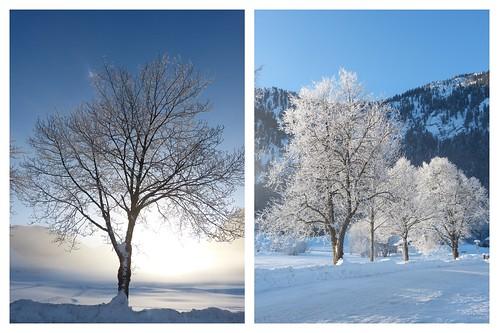 Winterzauber 2015-02-11