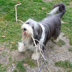 Guess who found a stick? I! I found a stick!