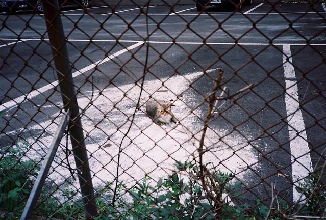停車場遇見貓