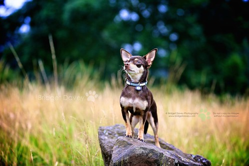 Lexi   Dog and Pet Photography London