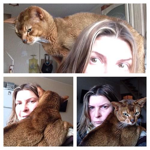 """Кот намекает мне: """"Хватит смотреть в монитор! Надо вздремнуть!""""))) #старыйкрым  #abyssinian"""