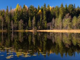 Solitude in the Nordmarka
