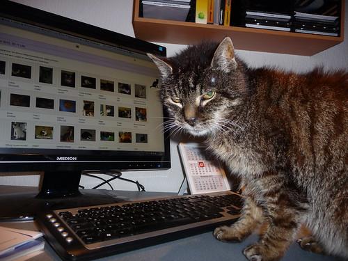 cat–computer