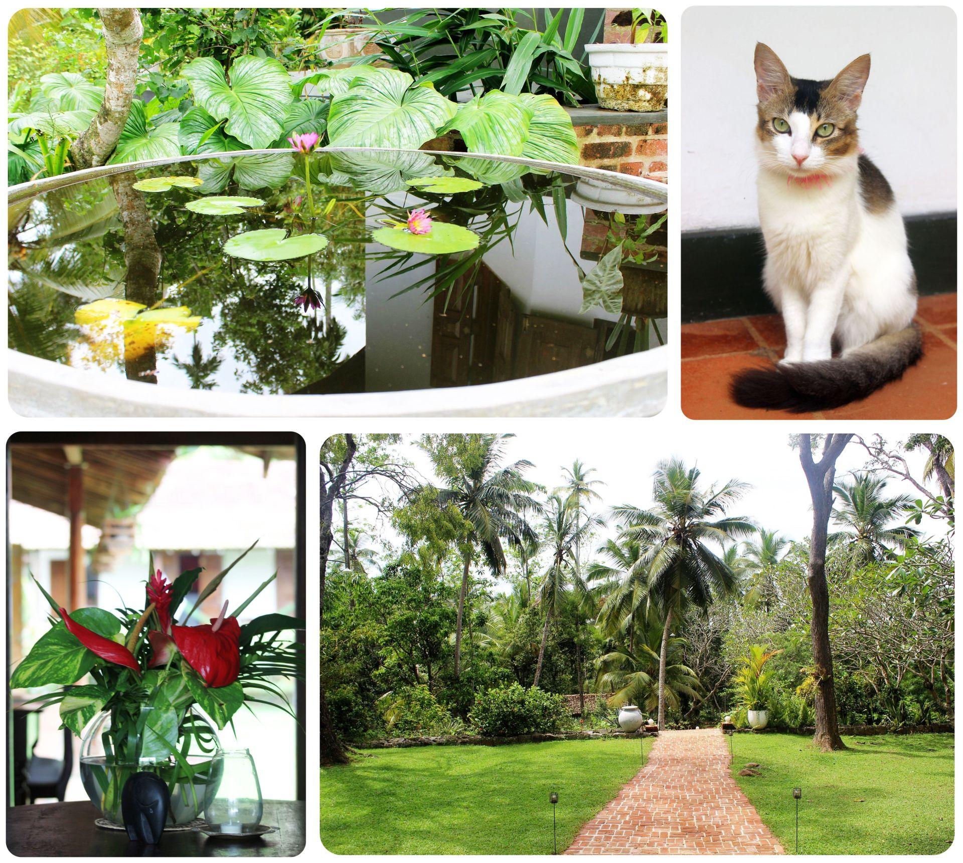 Sri Lanka Villa Templeberg Galle