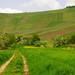 Way to the vineyard by Batikart