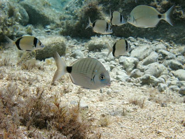 Gozo and Comino underwater